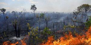lei de crime ambiental
